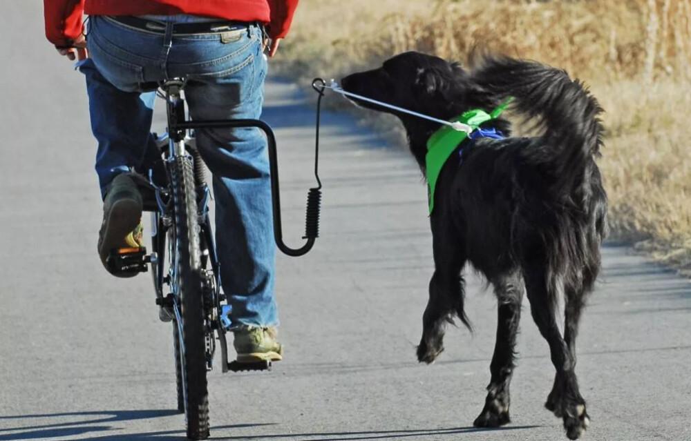 Aditamento para mascota
