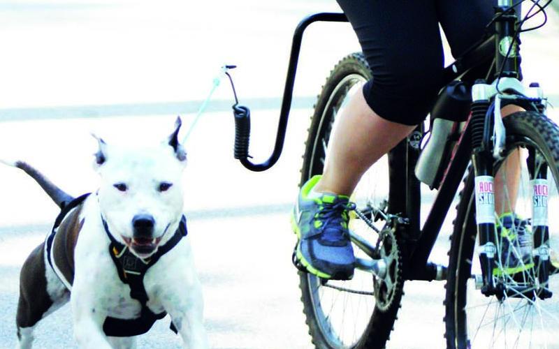 Montar en bici con perros