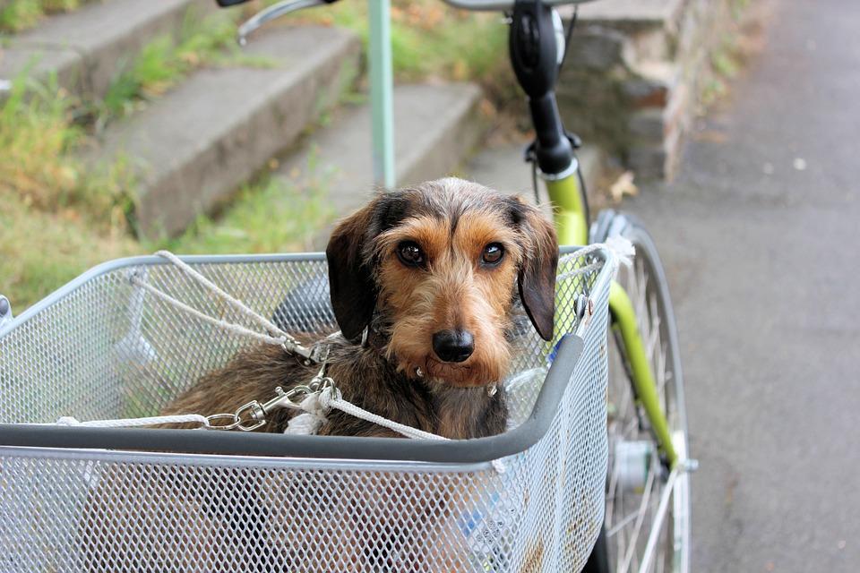Ciclismo y masctoa