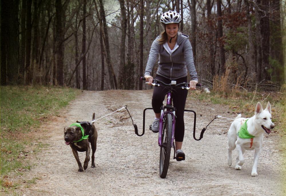 Cómo montar en bici de manera segura con tu mascota