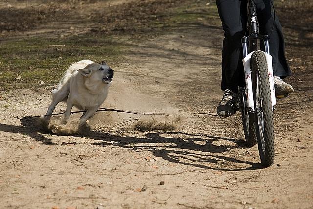 Ciclismo y ataque de perro