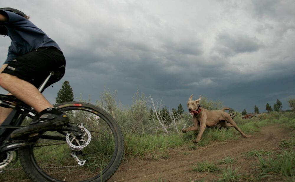 Perro, ciclismo